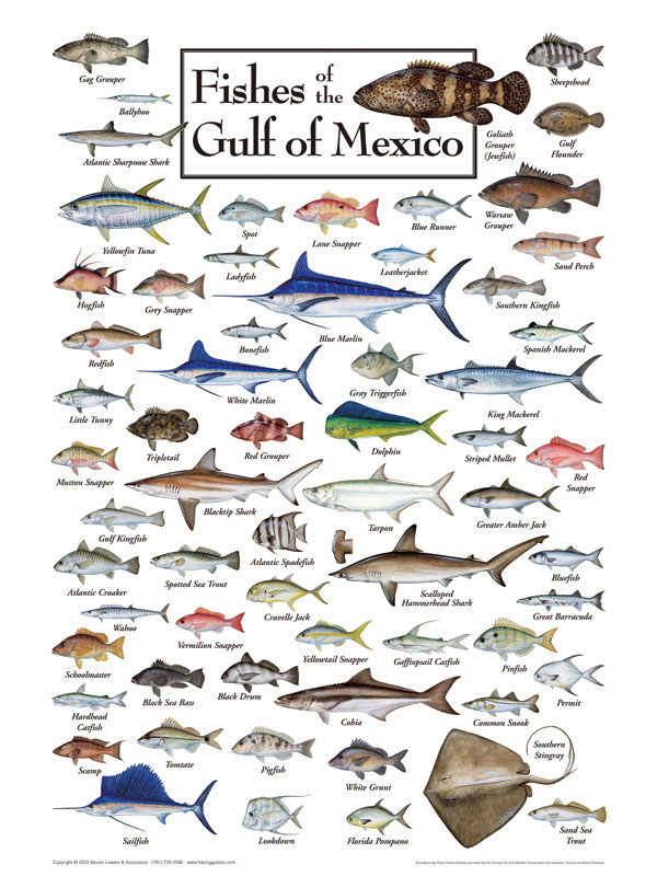 Fishes Of The Gulf Of Mexico Puzzle Jigsaw Puzzles