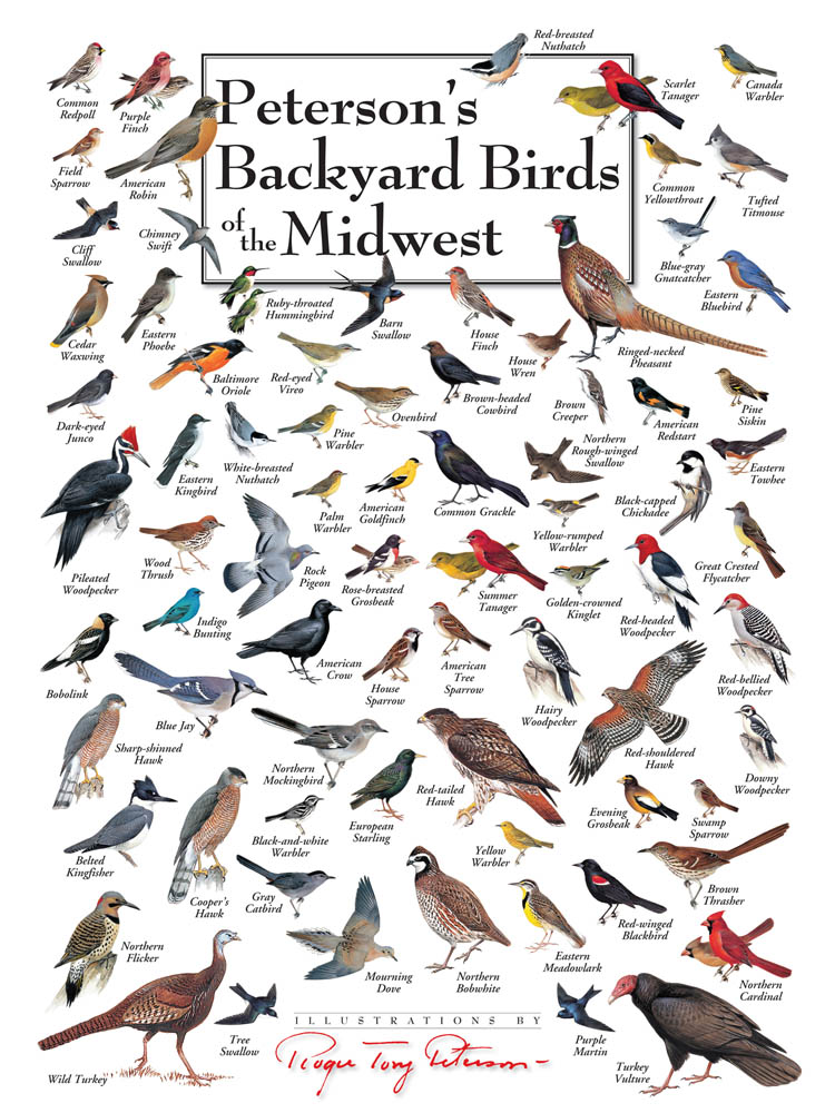 peterson s backyard birds of the midwest jigsaw puzzles rh heritagepuzzle com peterson's backyard birds of northern california peterson's backyard birds of the southeast