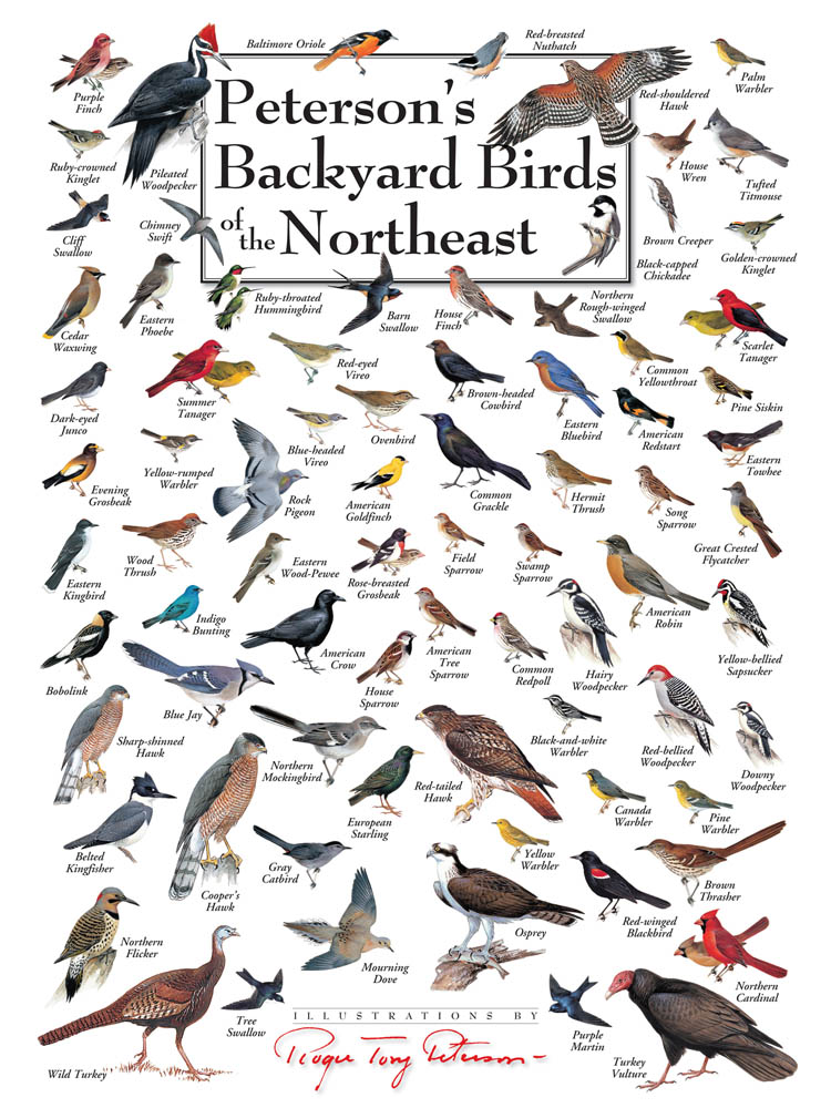 Peterson's Backyard Birds Puzzles | Jigsaw Puzzles