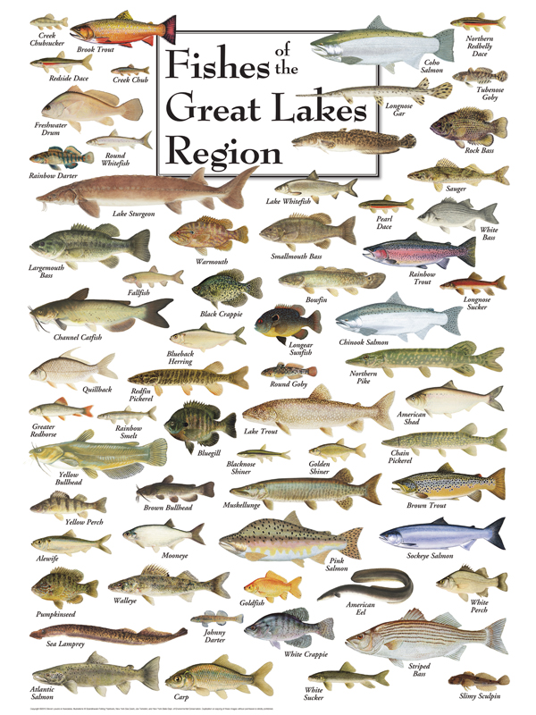 30520 Fishes of the Great Lakes
