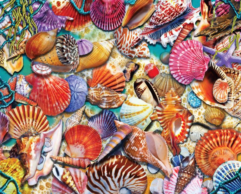 30703 - Coastal Shells