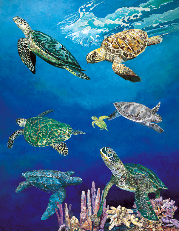 40502 Majestic Sea Turtles