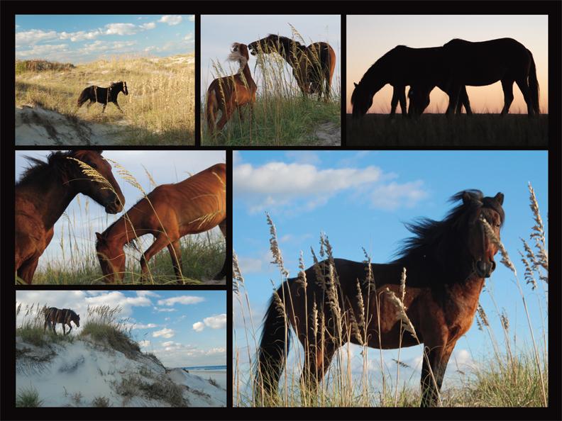 40569 Wild Horses